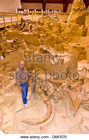 In-situ exhibit of 26,000 year old Wooly Mammoth bones, The Mammoth Site, Hot Springs, South Dakota USA - Stock Photo