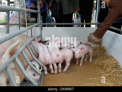 Pork and brood seen on a local cattle fair in the Spanish island of Mallorca - Stock Photo