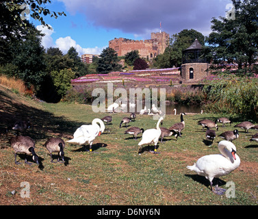 River Anker and Castle gardens, Tamworth, Staffordshire, England, Western Europe. - Stock Photo