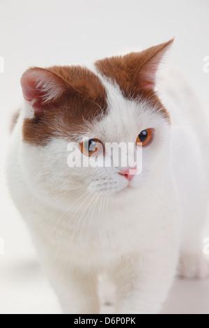 arctic cat quad
