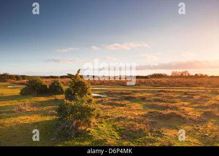 The heathland of the New Forest at the end of a winter's day, Hampshire, England, United Kingdom, Europe - Stock Photo