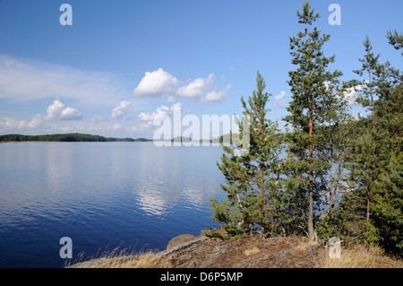 Young Scots pine trees (Pinus sylvestris) growing near rocky shore of Lake Saimaa, near Savonlinna, Finland, Scandinavia, - Stock Photo
