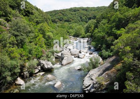 River Taravo flowing down from Corsica's National Park (Parc Naturel Regional de Corse) through forest, Corsica, - Stock Photo