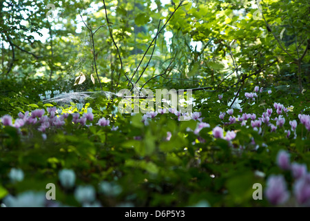 A sunray lightning a cobweb surrounded by flowers. - Stock Photo