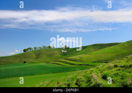 Cherhill white horse, first cut into chalk downland in 1780, Wiltshire, England, United Kingdom, Europe - Stock Photo