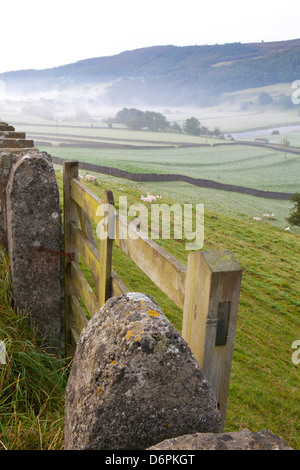 Gate in stone wall and field, near Burnsall, Yorkshire Dales National Park, Yorkshire, England, United Kingdom, - Stock Photo