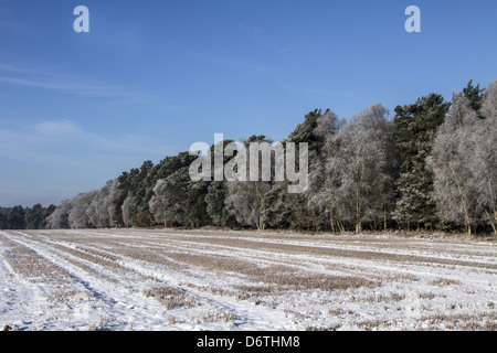 This large field next to Knettishall Heath, is in the Brecklands on the Suffolk, Norfolk border - Stock Photo
