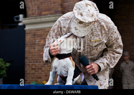 Commandant of the US Marine Corps Gen. James F. Amos pets incoming Marine Corps mascot Private First Class Chesty - Stock Photo