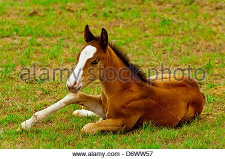 Black Hills Wild Horse Sanctuary near Hot Springs, South Dakota USA - Stock Photo