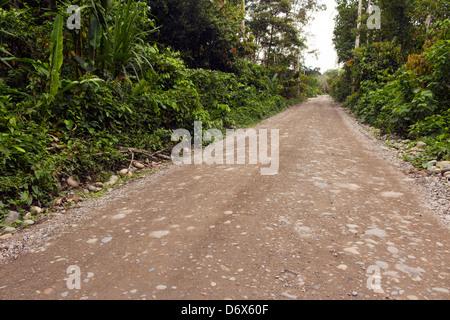 Dirt road running through primary tropical rainforest in Ecuador - Stock Photo