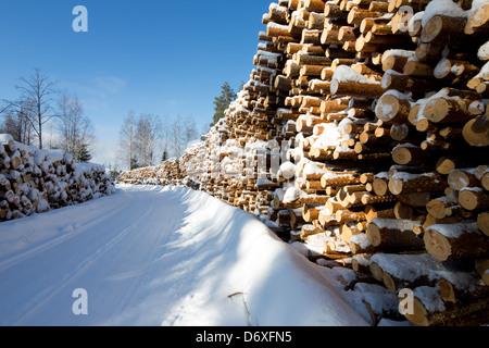 Piles of  pine ( pinus sylvestris ) logs at logging road , Finland - Stock Photo