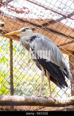 White stork in zoo looking outside without freedom - Stock Photo