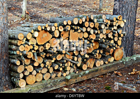 Firewood that was cut and stacked between two pine trees. - Stock Photo