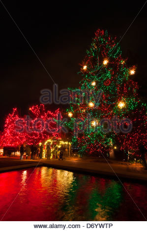 Blossoms Of Light One Million Lights Illuminating The Denver Stock Photo Royalty Free Image