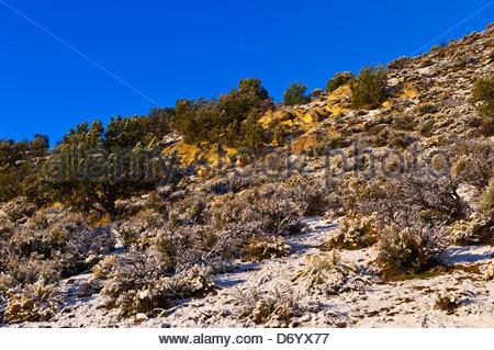 Stateline Campground, Vermillion Cliffs National Monument, Utah USA - Stock Photo