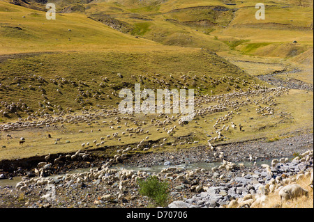 Mountain sheep and goats in Val de Tena at Formigal in the Spanish Pyrenees mountain, Northern Spain - Stock Photo