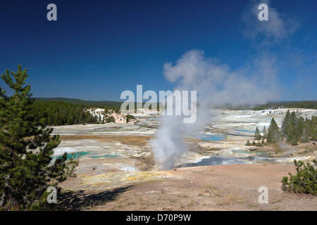 USA, Wyoming, Yellowstone National Park, Norris Geyser Basin, Black Growler Steam Vent in Porcelain Basin - Stock Photo