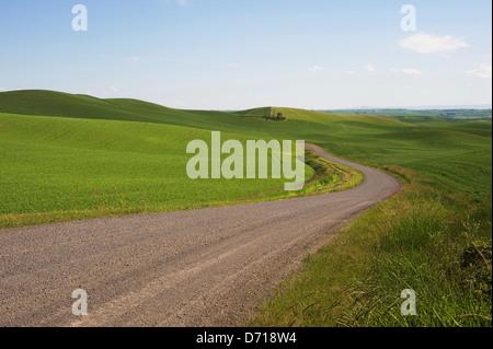 USA, Washington State, Palouse Country, Country Road Through Wheat Fields - Stock Photo