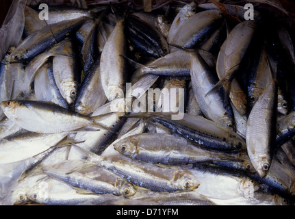 Chum used for offshore and deep sea fishing near Port ...