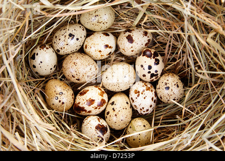 eggs in nest made of hay as background - Stock Photo