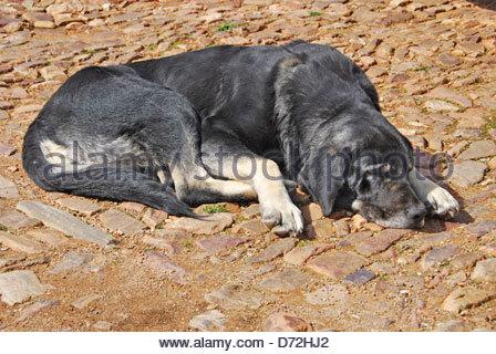 Bored dog lying on the ground - Stock Photo