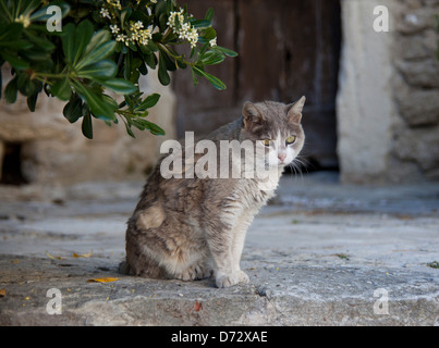 Bonnieux, France, a cat sits in the shade - Stock Photo
