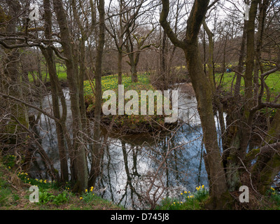 Farndale walk along the bank of the River Dove in the North Yorkshire Moors National Park famous in spring time - Stock Photo