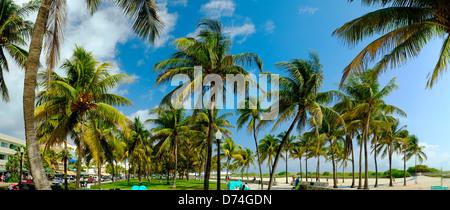 Palm Trees, South Beach, Miami, Florida, USA - Stock Photo