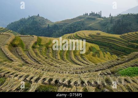 Rice terraces of Longsheng, Guangxi, China - Stock Photo