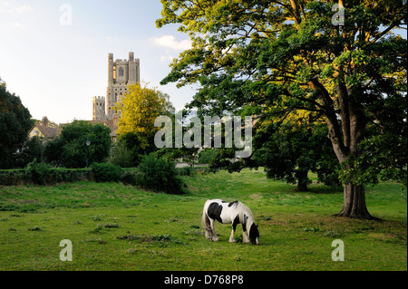 Ely Cathedral, Cambridgeshire, England. The West Tower seen from the south. Pony grazing in summer meadow - Stock Photo