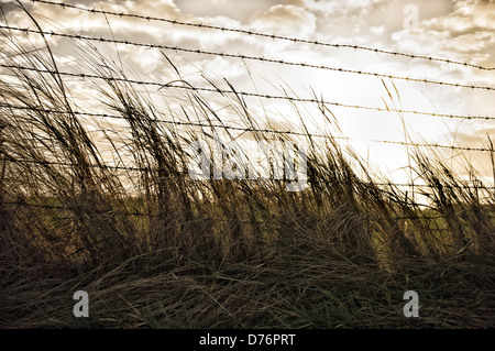 Grass and Barbed Wire Fence in front of a dramatic stormy sky. Picture by Julie Edwards - Stock Photo