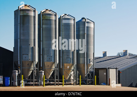 large scale commercial chicken farm with four grain storage silos for the storage of poultry feed - Stock Photo