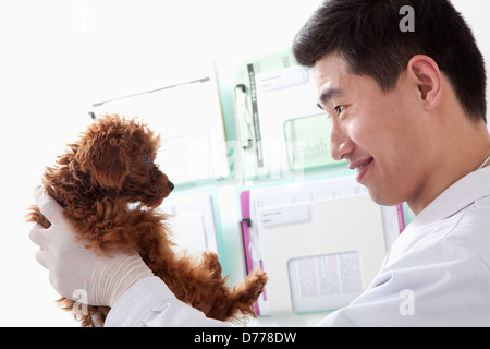 Veterinarian holding dog in office - Stock Photo