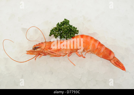 Crevettes on a bed of ice. - Stock Photo