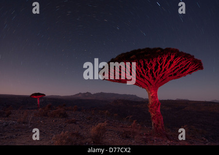 Abstract photo from the Dragon blood tree on Socotra - Stock Photo