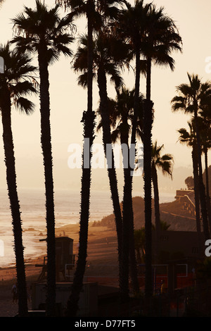 USA California San Clemente Palm trees beach awash in sunset light - Stock Photo
