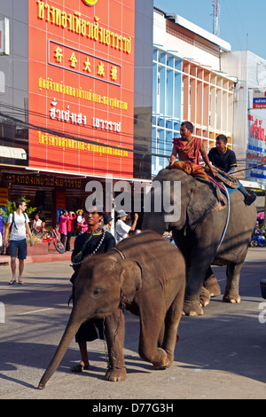 Thailand Surin city elephants in the street during the festival - Stock Photo