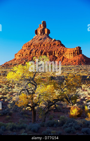 USA Utah Cottonwood tree in fall color change below spire in Valley Gods State Park - Stock Photo