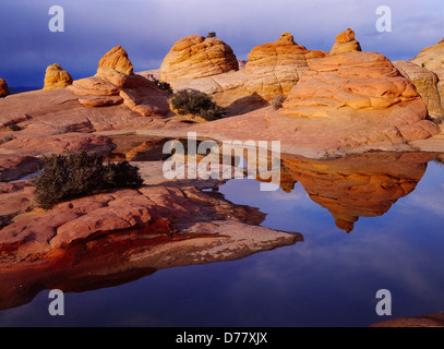 Wind-sculpted beehives reflected in ephemeral slickrock pool Vermilion Cliffs National Monument Paria-Vermilion - Stock Photo