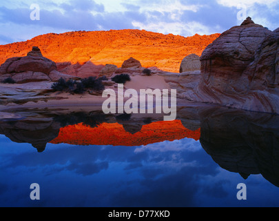 Early morning reflection in slickrock pool Paria Canyon Vermilion Cliffs Wilderness Area Vermilion Cliffs National - Stock Photo