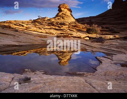 Navajo Sandstone beehives reflected in ephemeral slickrock pool Vermilion Cliffs National Monument Paria-Vermilion - Stock Photo