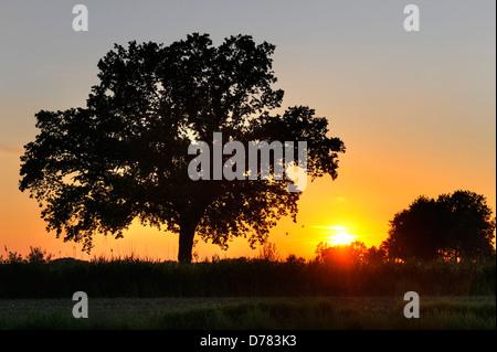 Sundown in the nature reserve Kirchwerder of Meadows in Kirchwerder, Hamburg, Germany, Europe - Stock Photo