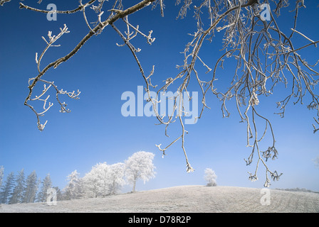 Ireland, County Monaghan, Tullyard, Trees in winter on crest of hill covered in hoar frost on outskirts of Monaghan - Stock Photo