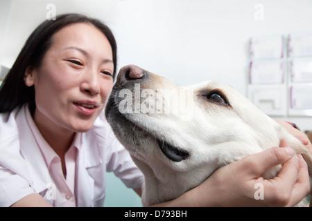 Dog in veterinarian's office - Stock Photo