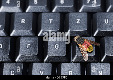 Fly on computer keyboard, symbolic photo federal Trojan , Fliege auf Computertastatur, Symbolfoto Bundestrojaner - Stock Photo
