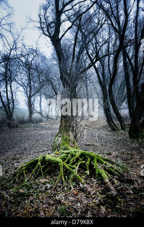 Tree roots and fog in the Elbufer in Kirchwerder, 4 and marshy land, Hamburg, Germany, Europe - Stock Photo