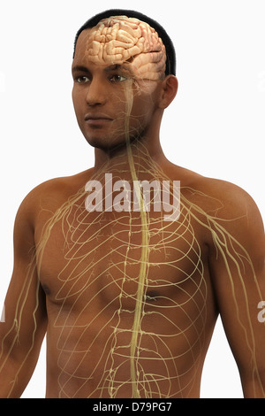 The Nerves Upper Body - Stock Photo
