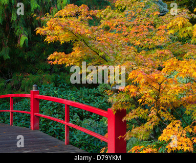 Kubota Garden, Seattle, WA: Heart Bridge with fall colored branches of a Japanese maple - Stock Photo