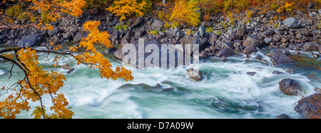 Wenatchee National Forest, Washington: Fall color surrounding rapids on the Wenatchee River in Tumwater Canyon - Stock Photo