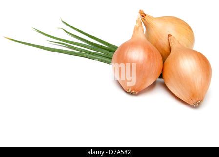 Fresh bulbs of onion on a white background - Stock Photo